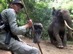 Slonom pralesným hrozí vyhynutie
