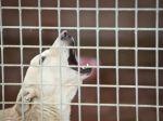 Občania majú povinnosť nahlásiť týranie zvierat