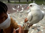 Čína bojuje s vtáčou chrípkou, zaočkuje desaťtisíce holubov