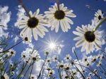 Slováci si užívajú slnečný deň, niekde bude aj 20 stupňov