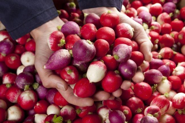 Reďkovky -  štipľavé ružové guľôčky plné zdravia