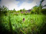 Z Devínskej Kobyly ukradli rastliny za takmer 50-tisíc eur
