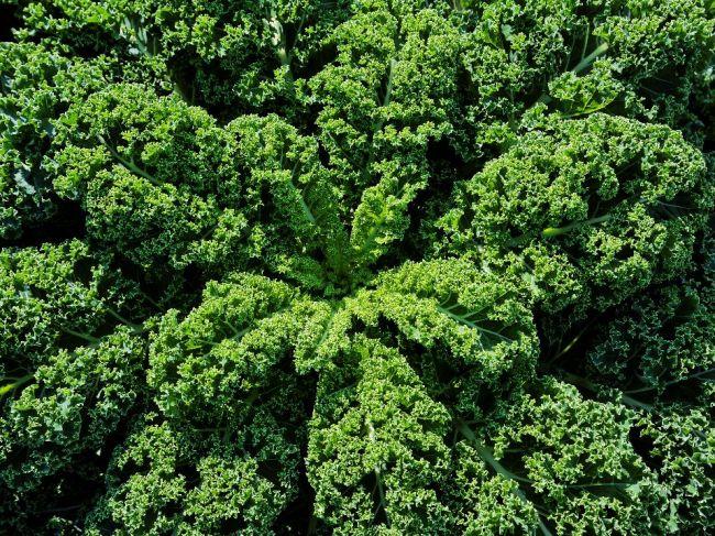 Zelený kel, zelenina plná zdravia