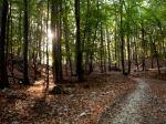 V lese neďaleko Košíc našli šesť delostreleckých mín