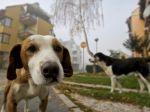 Mesto Žilina zverejní zoznam psov na internete
