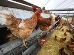 Pokrok v boji s vtáčou chrípkou, už týždeň žiadna obeť
