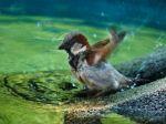 Vtákom na Dunaji hrozí zánik, chýba im ochrana