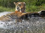 Zvieratá v ZOO si v horúčavách užívajú osviežujúci kúpeľ