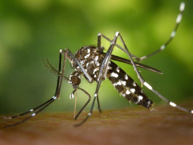 Ako bojovať proti komárom?
