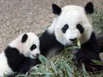 V atlantskej zoo sa narodili dve mláďatá pandy veľkej