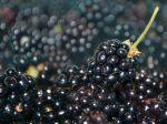 Ovocím proti kalóriám