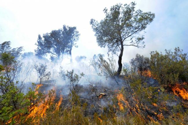 Požiar lesa pri Zohore hasiči lokalizovali