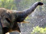 V Číne vybudujú pre slonov kantínu s bambusom a banánmi