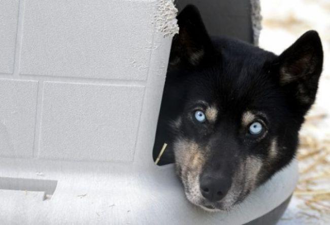 Sloboda zvierat podala trestné oznámenia za utýranie psov