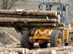 Daňová kobra rozbila skupinu nekalých obchodníkov s drevom