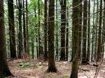 Na Kolibe zmizol les, bude to riešiť prokuratúra