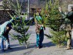 Ukradnúť vianočný strom sa neoplatí, domácnosť zamorí hrozný zápach