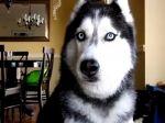 Video: Pes, ktorý vie povedať 12 slov