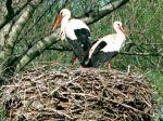 Vtákom roka 2014 je bocian biely