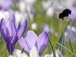 Pod vznik alergie sa môže podpísať aj nezdravý životný štýl