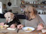 Video: Keď pes raňajkuje ako človek