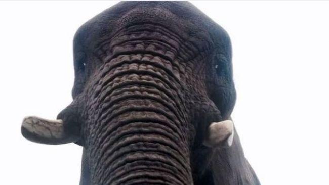 Slonica v britskom safari parku našla mobil a urobila si 'selfie'