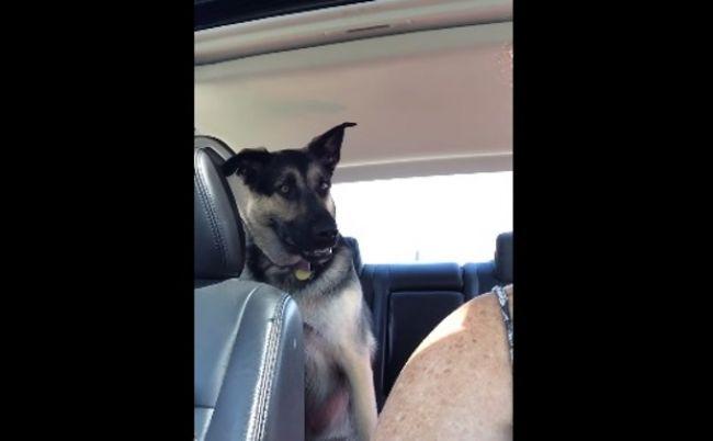 Video: Rozprávajúci psík? Sledujte video