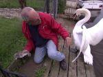 Video: Sťažená záchrana mladej labute