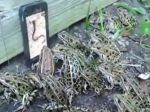 Video: Žaby vs. smartfón s dážďovkami