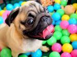 Video: Nefalšovaná psia radosť