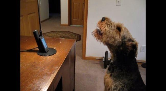"""Video: Ako sa pes """"rozpráva"""" s majiteľkou cez telefón"""