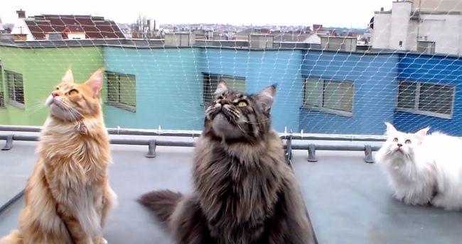 Video: Mačky, ktoré sa rozprávajú s vtákmi