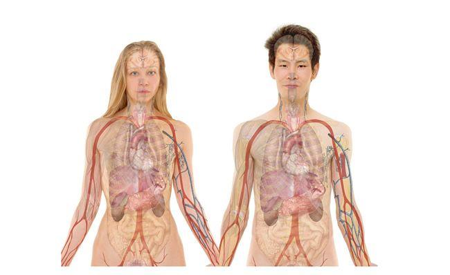 Smrteľné limity nášho tela