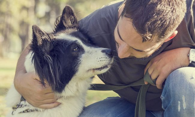 Čo sa deje s mozgom vášho psa, keď vás vidí?