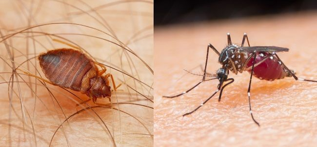 Vedci zistili, aké farby odpudzujú ploštice a komáre
