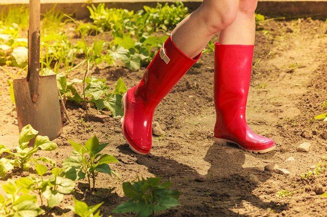 Čo s vami urobí 30 minút práce v záhrade?