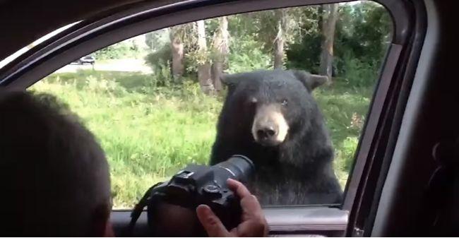 Video: Medveď vydesil turistov