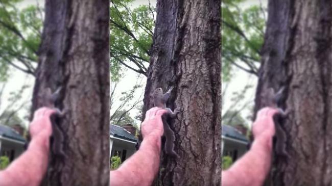 Video: Muž chcel vypustiť veveričku. Takúto katastrofu však nečakal