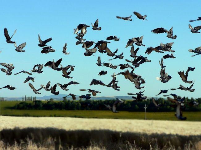 fotky mužov s veľkými vtáky