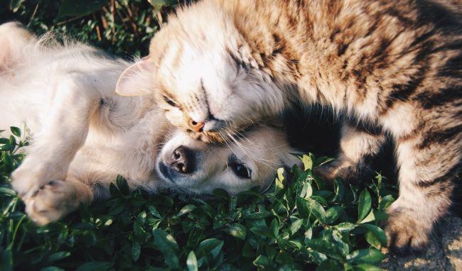 Kŕmite svojho psa alebo mačku surovým mäsom? Nielen, že tým ohrozujete ich, ale aj seba!