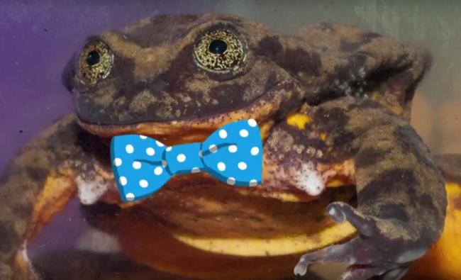 žaba Online Zoznamka
