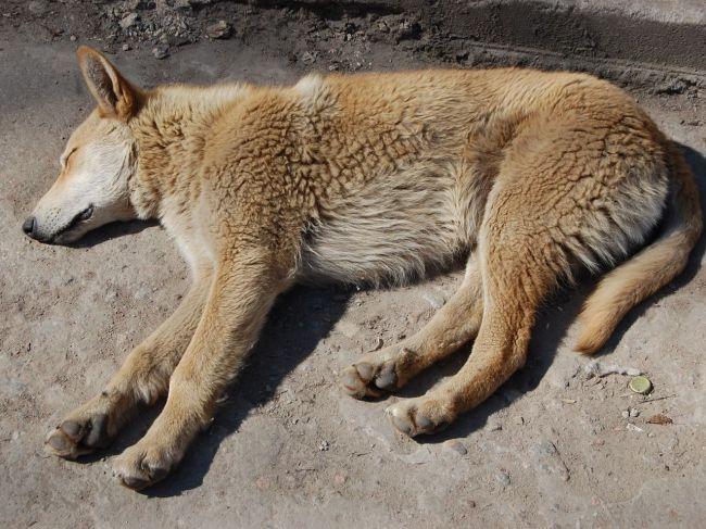 Počas odchytu túlavých psov došlo k vyhrážaniu sa sekerou