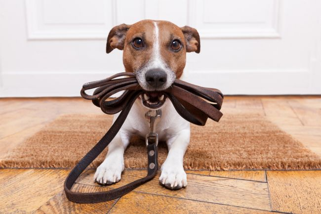 Ako dlho by malo trvať venčenie psa? Väčšina z nás mu nevenuje dostatok času