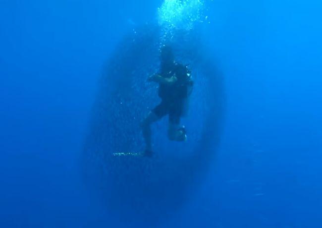 Video: Ryby obklopili potápača v Egypte, aby ho ochránili pred útokom žraloka