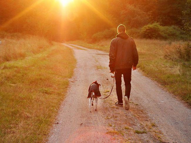 Psi preberajú fyzické trápenia a psychických démonov svojich majiteľov