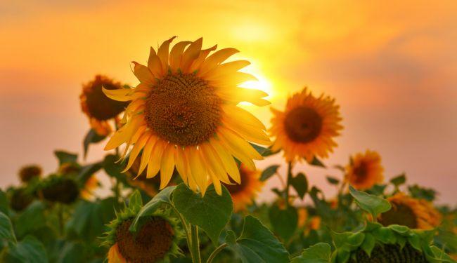 Do nového týždňa vkročíme spoločne so slnečným počasím