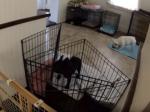 Video: Majitelia nastražili kameru na svojho psa. Týmto kúskom ich prekvapil