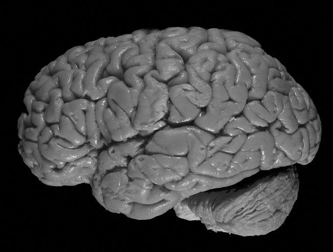 Stres šokujúcim spôsobom ovplyvňuje mozog, na toto si dávajte pozor