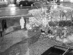 Video: Mužovi sa v záhrade zakrádala suseda. Kamera zachytila, čo urobila