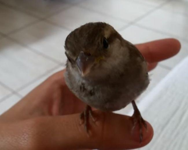 Video: Čo sa stane, keď pred vtákom začnete spievať?